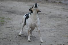 dog-248260_1280