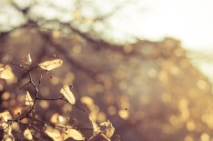 autumn-226450_1280 (1)